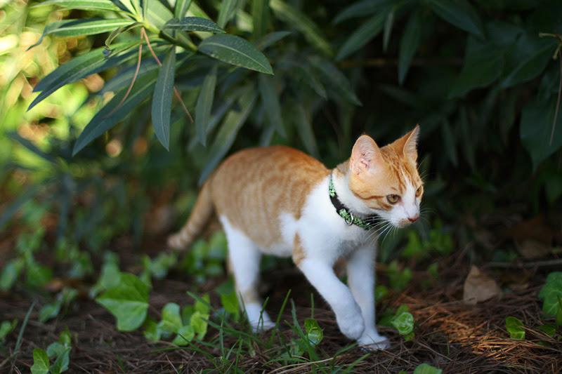 Chili the cat, блог Марины Гиллер