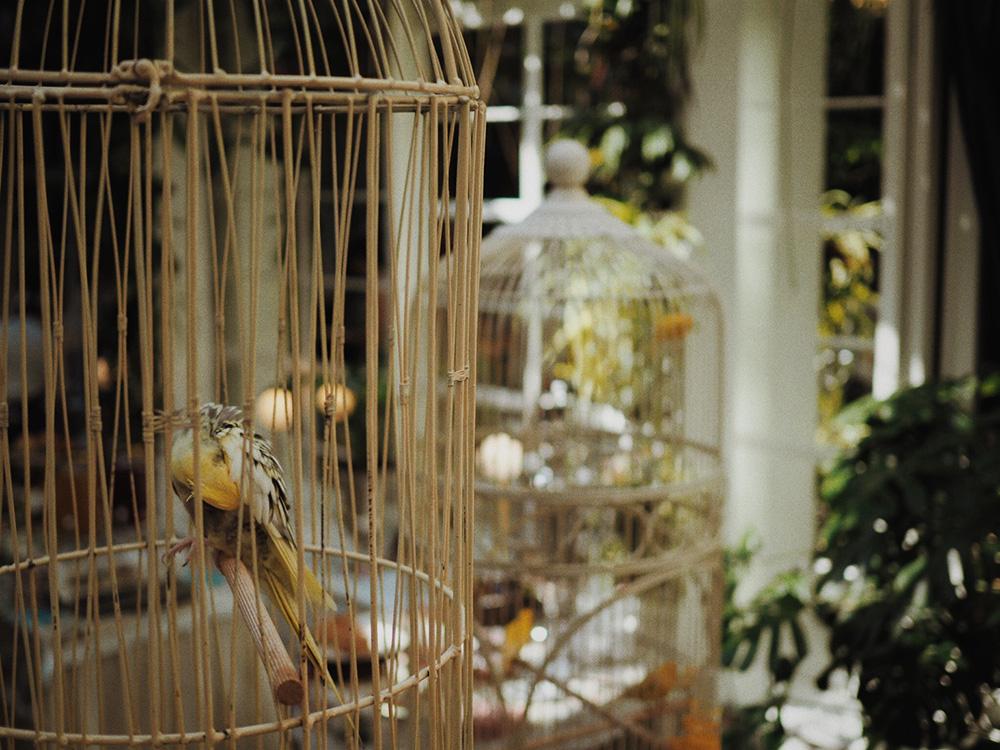 автраки в Ресторации Бачевских, Блог Марины Гиллер