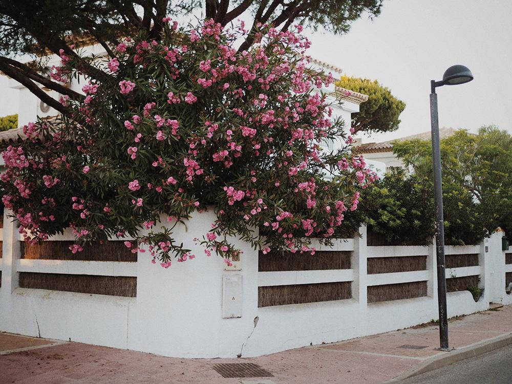Жизнь в Испании, блог Марины Гиллер