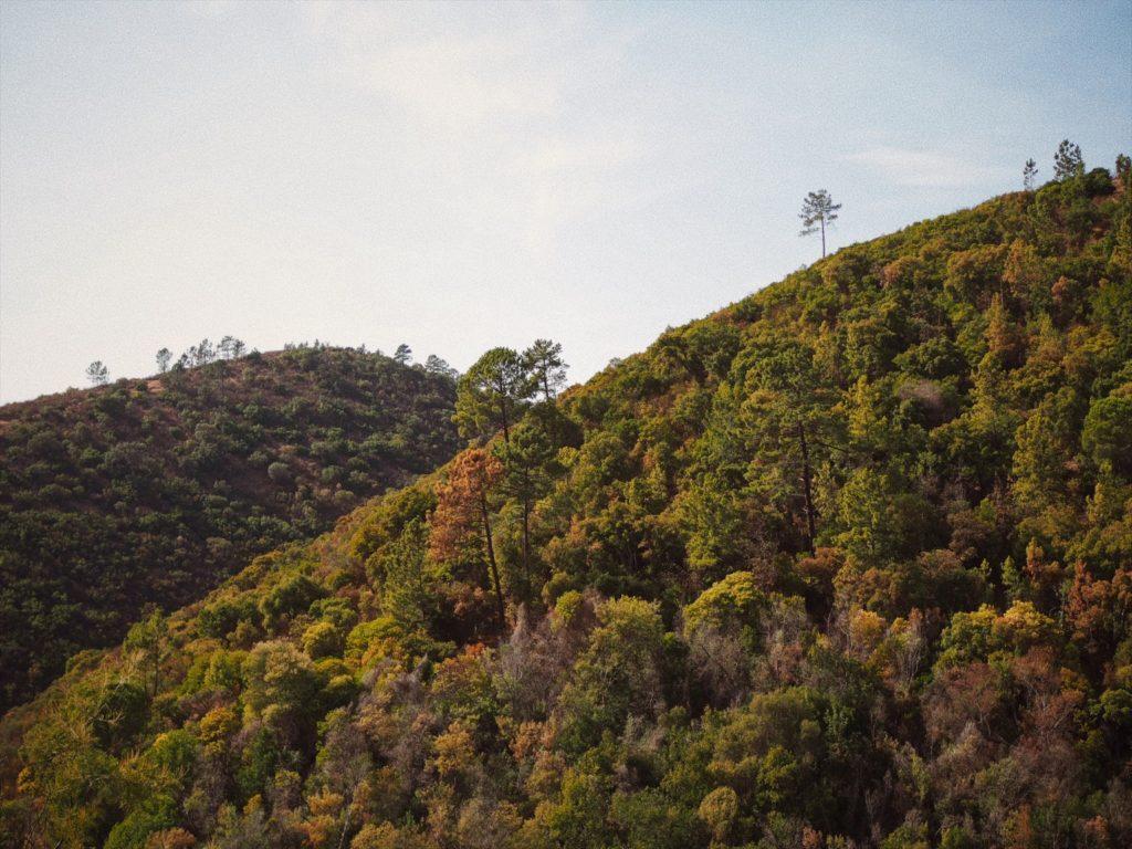 Caldas de Monchique, Португалия, Блог Марины Гиллер