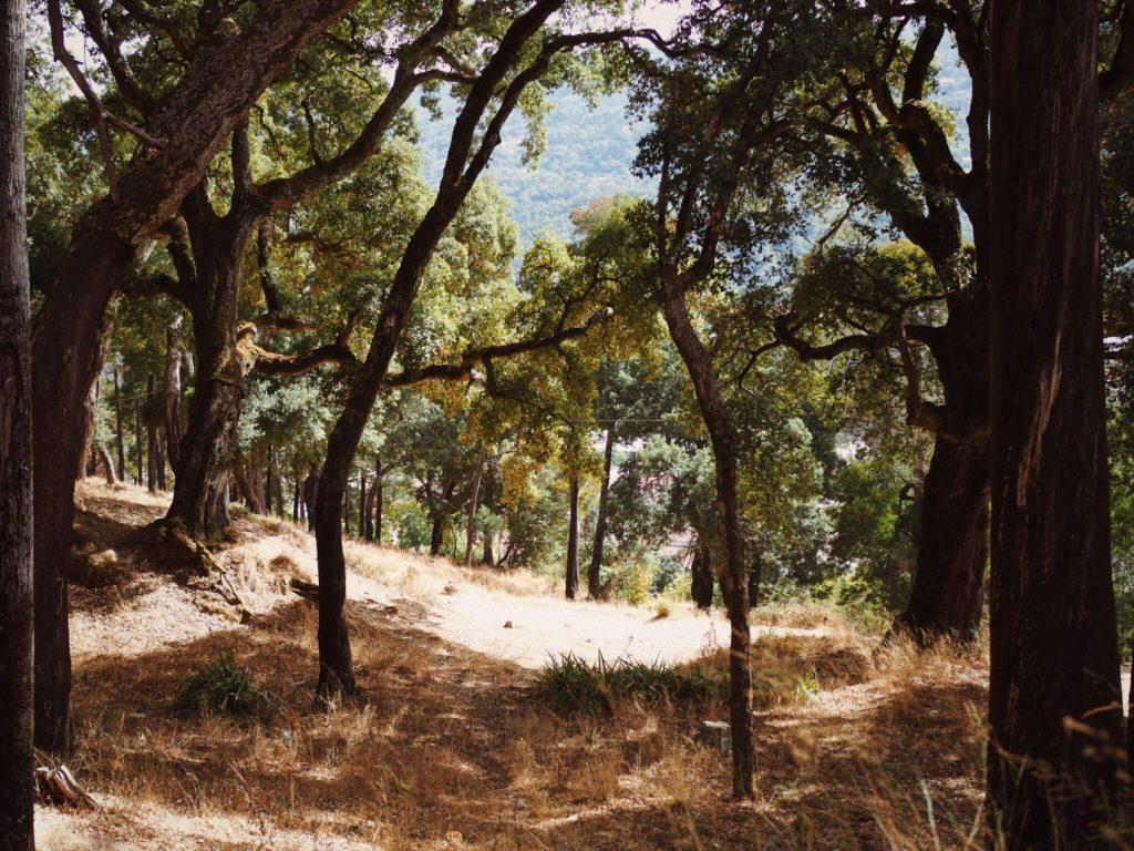 Пробковые дубы, Блог Марины Гиллер