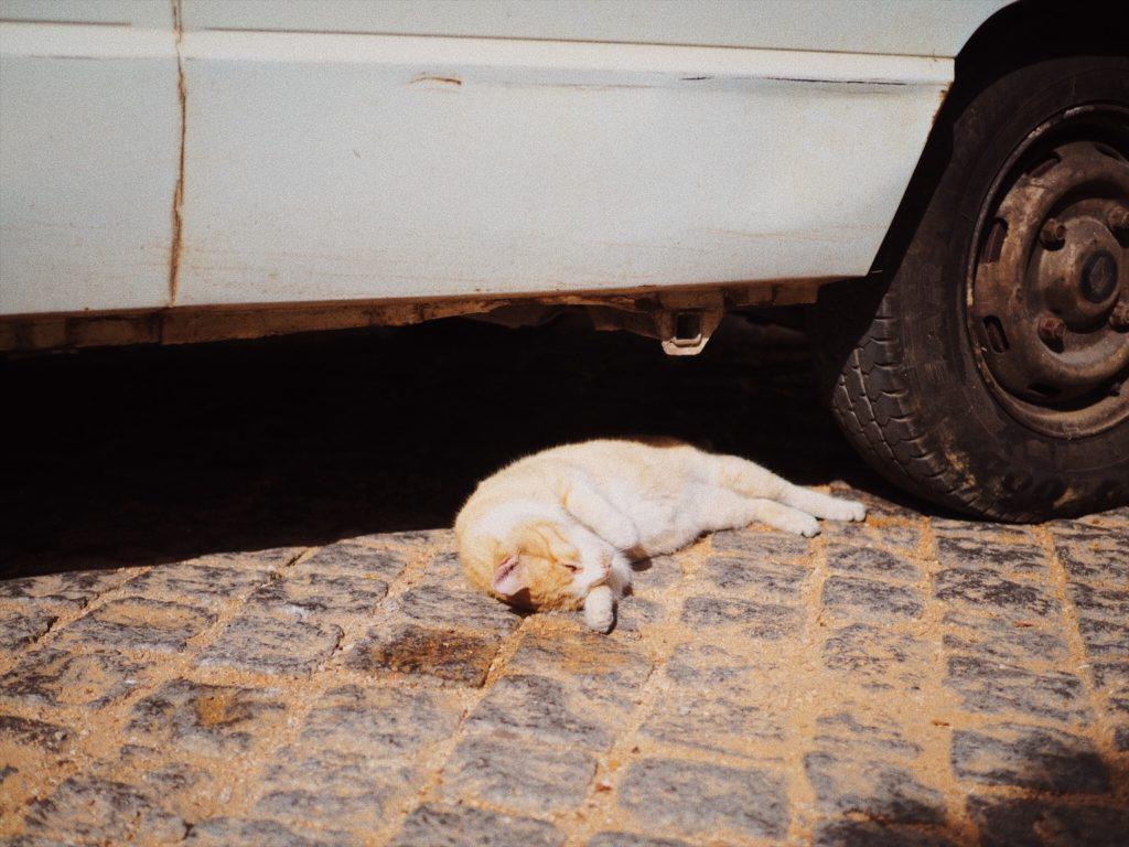Моншики, Португалия, Блог Марины Гиллер