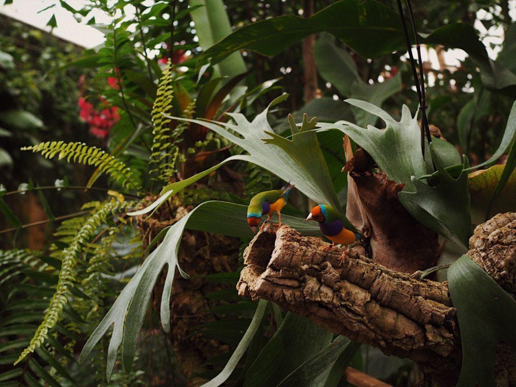 Парк бабочек в Бенальмадене, Блог Марины Гиллер